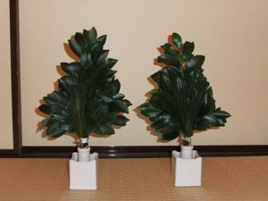Two bunches of sakaki in white ceramic holders