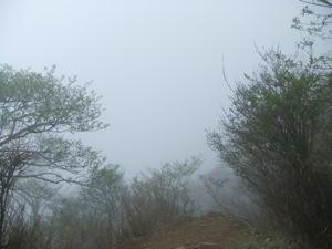 植物が霧の中に消えて行く