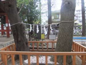 注連縄で結んだ木が日本見える。周りの玉垣越に抱き締める根も見える
