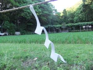 稲が生える田圃の前に紙垂が注連縄から垂らす