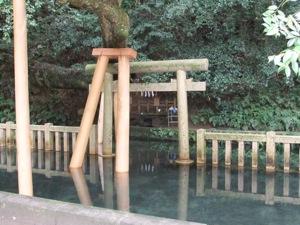 池の中に鳥居があるが、鳥居の上に大きな枝もある