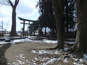境内の中から撮られた鳥居と木々