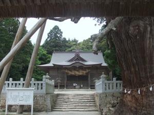 門のなかから撮った写真で、杉も社殿も見える。